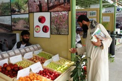 Saving Afghanistan's Economy: A daunting challenge